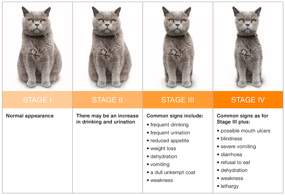 Common Feline Illnesses Have We Seen Your Cat Lately